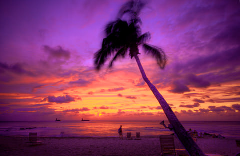 Purple sunset behind palm tree on beach